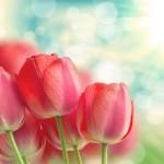「引き寄せの法則」が教える恋愛の真実