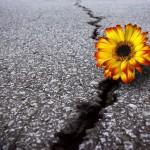 あなたの歩いたあとに咲く花